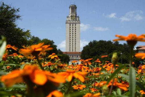 University of Texas tower rises in the distance above orange marigold flowers in the foreground